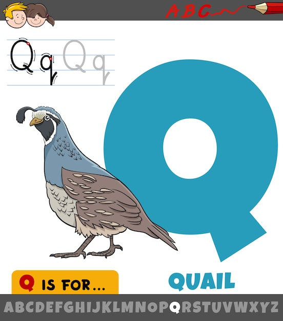 ウズラの鳥の動物の文字とアルファベットからの文字q Premiumベクター