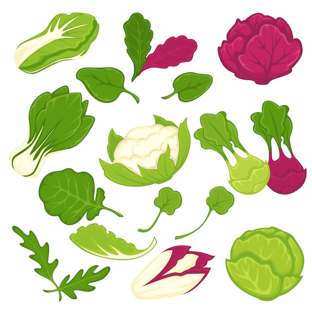 Lettuce salads leafy vegetables vector isolated icons set Premium Vector
