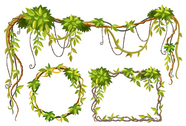 Liana branches and leaves Free Vector