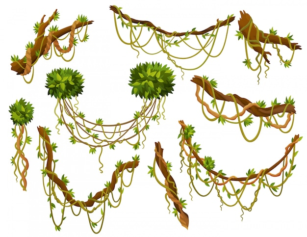 Liana or jungle plant or vine wild greenery winding branches  stem with leaves isolated decorative elements tropical vines rainforest flora and exotic botany wild curling species and twigs Premium Vector