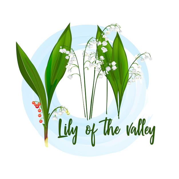 Lily of the valley-seeded plant. Premium Vector