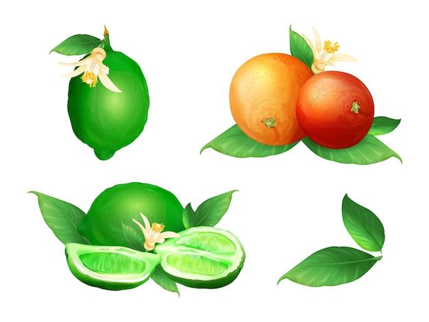 Известь и оранжевые иллюстрации ботанического цветения цитрусовых фруктов и листьев. Бесплатные векторы