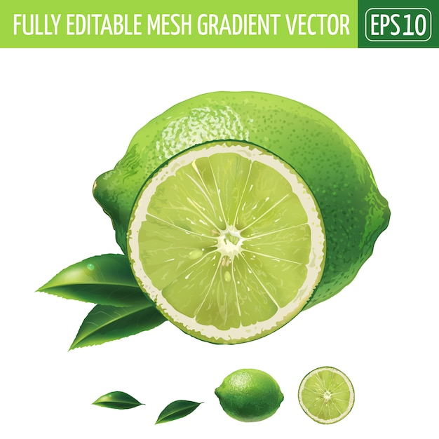 Lime illustration on white Premium Vector