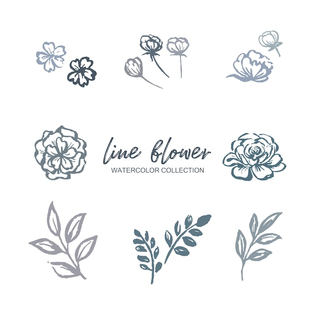 Line flower watercolor flower, foliage with  floral plant, illustration on white. Free Vector