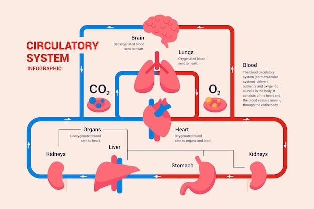 Linear circulatory system graphic Premium Vector