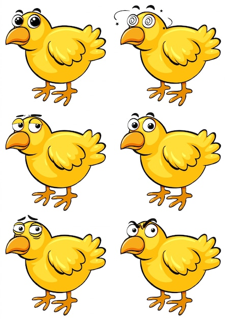 Little chicks with different emotions Free Vector