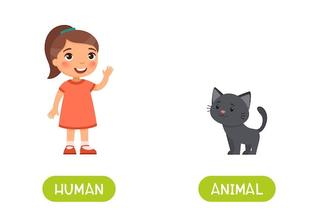 Little girl and cute black kitten. human and animal antonyms word card, opposites concept. Free Vector
