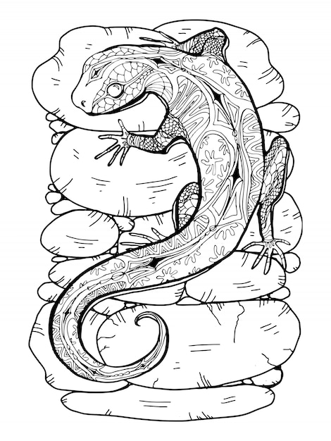 Lizard drawing for coloring page Premium Vector