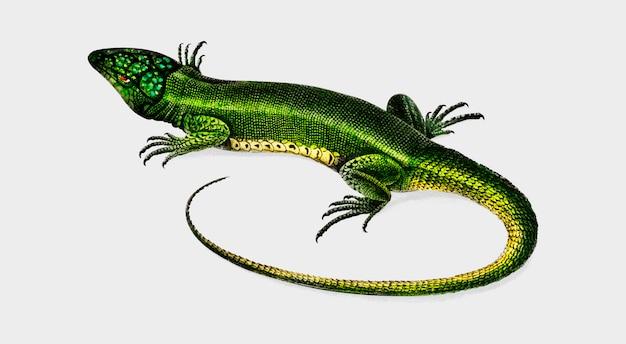 Lizard Free Vector