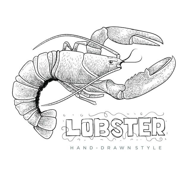 Lobster vector with hand drawn style, realistic animal illustration Premium Vector