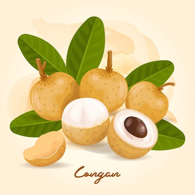 ローガンは甘い味のする果物です Premiumベクター