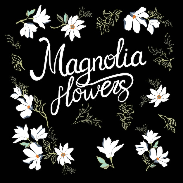 Loom flowers of magnolia on branch isolated on white Premium Vector