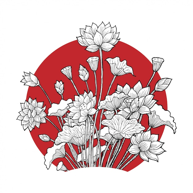 Lotus flower Premium Vector