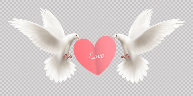 Love design concept with two white pigeons holding heart in its beak on transparent  realistic Free Vector