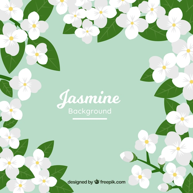 Lovely Background With Flat Jasmine Flowers Vector