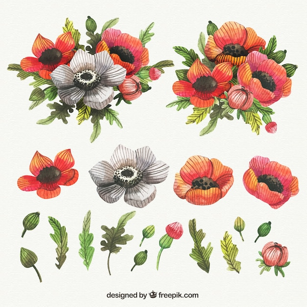 Lovely collection of watercolor poppies Free Vector