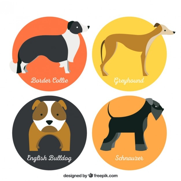 Lovely dog breeds Free Vector