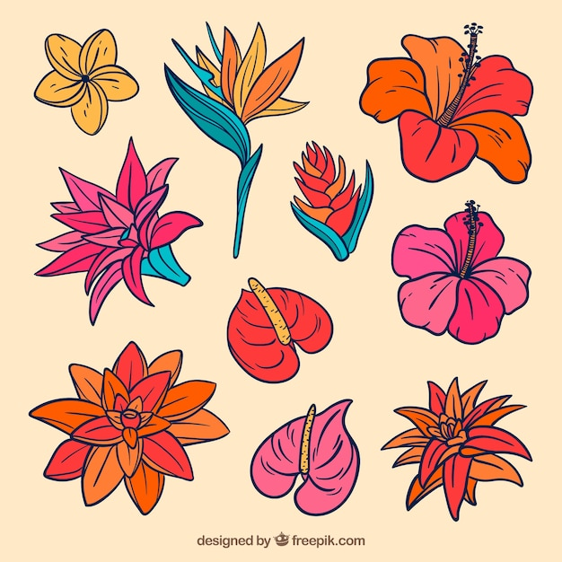 Lovely hand drawn tropical flower collection Free Vector