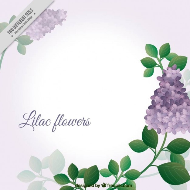 Lovely Lilac Flowers Background Vector