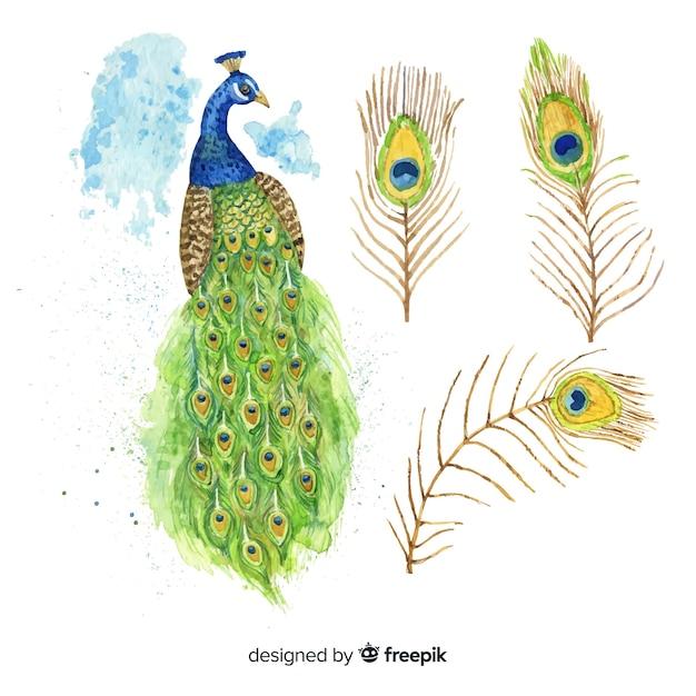 Lovely pavone in stile acquerello Vettore gratuito