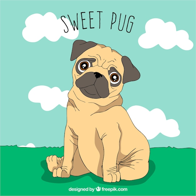 Lovely pug sitting on the grass