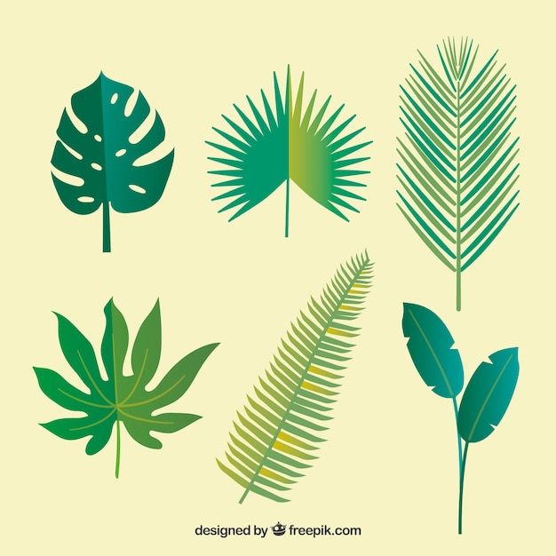 Free Vector Lovely Tropical Leaf Collection With Flat Design Download this free vector about tropical leaves background, and discover more than 8 million professional graphic resources on freepik. lovely tropical leaf collection