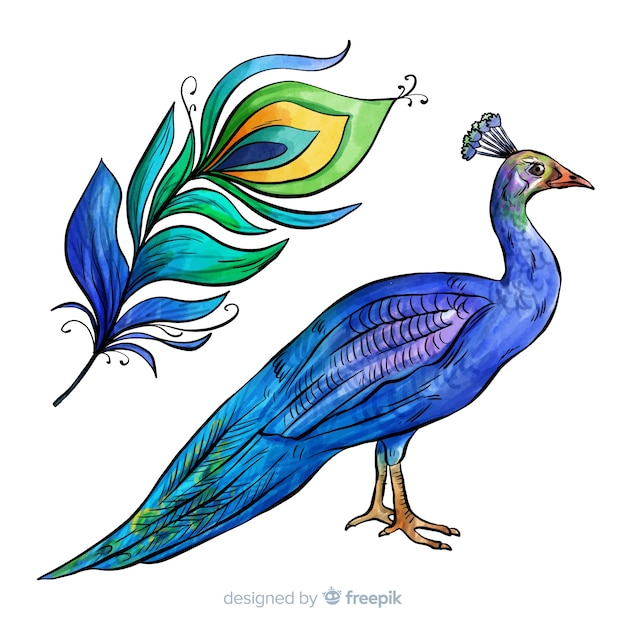 Lovely watercolor peacock Free Vector