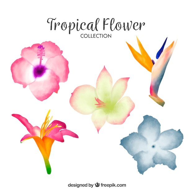 Lovely watercolor tropical flower collectio Free Vector