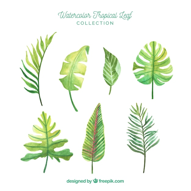 Free Vector Lovely Watercolor Tropical Leaf Collection Perfect for tropical or luau themed party. lovely watercolor tropical leaf collection