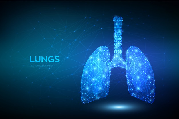 Lungs. low polygonal human respiratory system lungs anatomy. treatment of lung diseases. medicine cure tuberculosis, pneumonia, asthma. Premium Vector