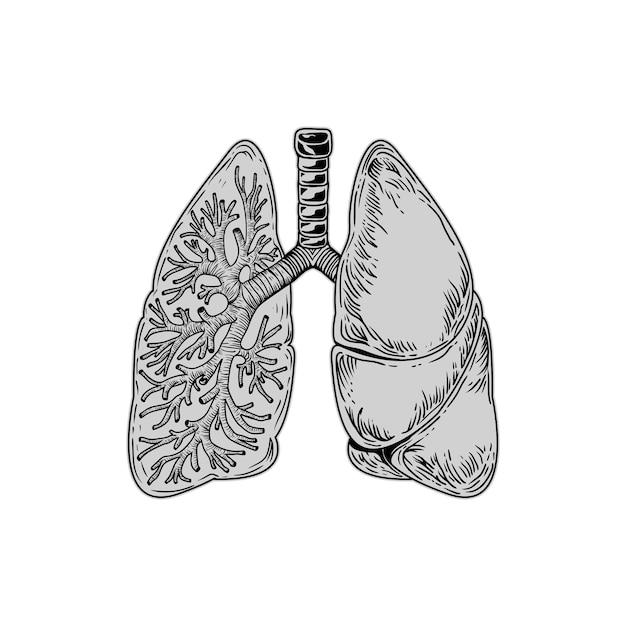 肺 Premiumベクター
