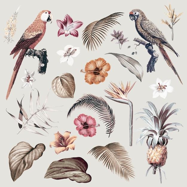 Macaw foliage illustration Free Vector