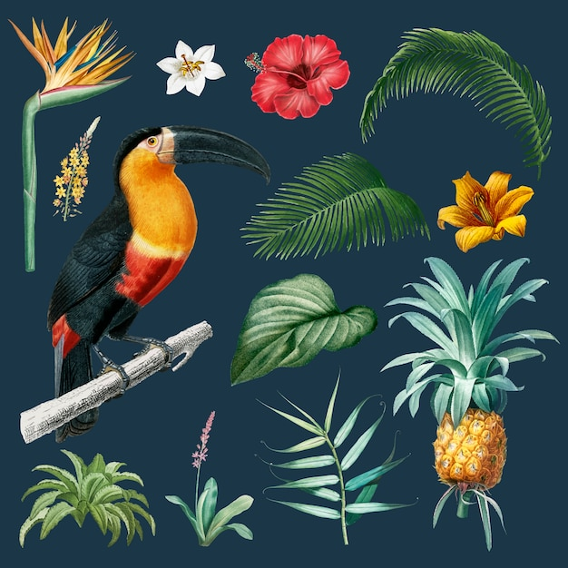 Macaw foliage illustration Free Vector