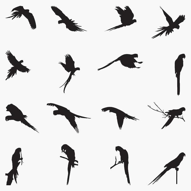 Macaw silhouettes illustration Premium Vector