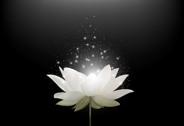 Magic White Lotus Flower On Black Background Vector Premium Download
