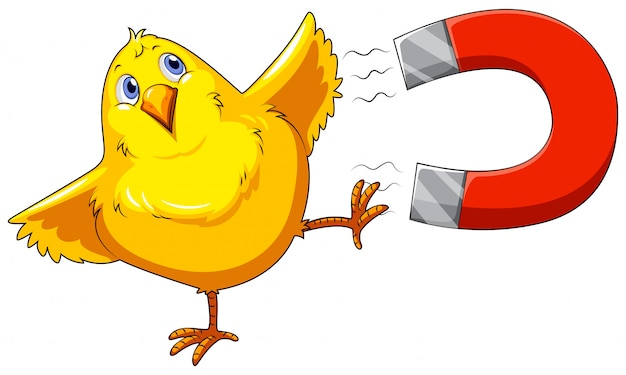 Magnet and chick Free Vector