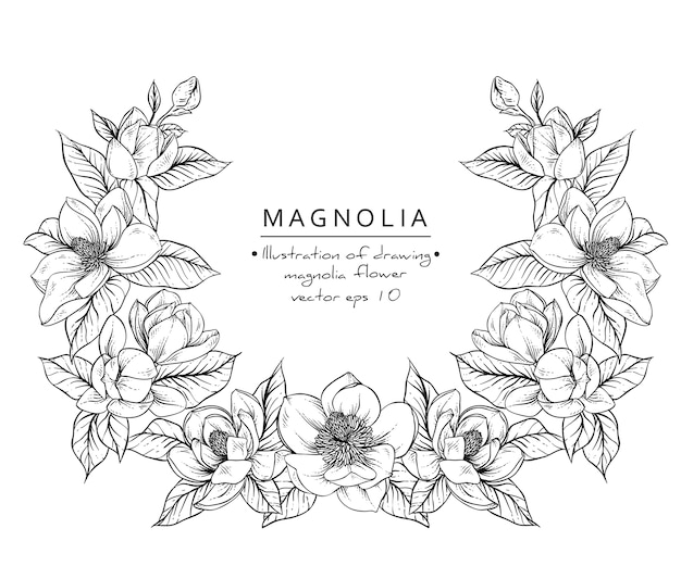Flowers Vector Drawing Png: Magnolia Flower Drawings. Vector