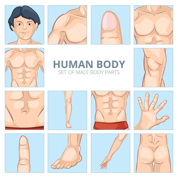 Male body parts in cartoon style. human chest, knee and abdomen, foot and hand, buttocks ass, finger and phalange. vector illustration icons set Free Vector
