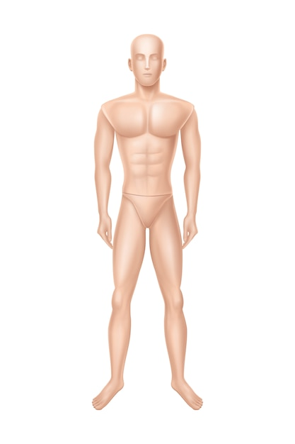 Male mannequin, manikin for clothing store. Free Vector