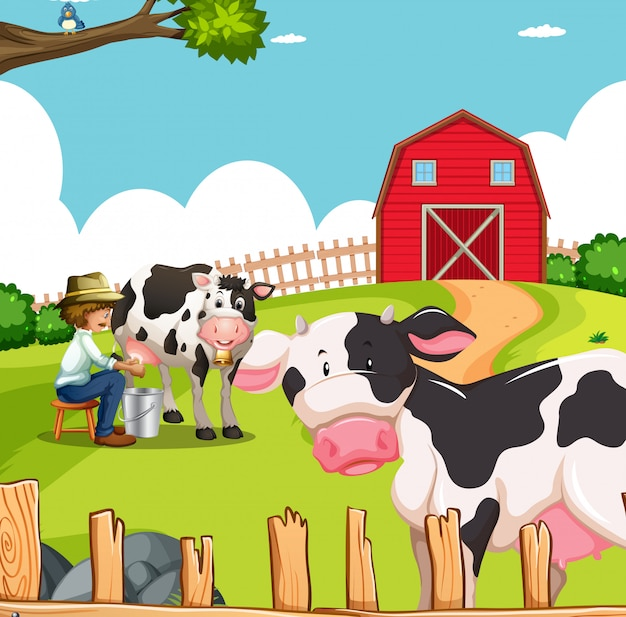 Man and cows on farm Free Vector