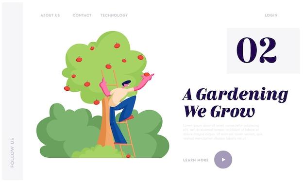 Фермер собирает яблоки в корзину. мужской персонаж-садовник, собирающий спелые плоды с органического дерева в саду, целевая страница веб-сайта здорового питания, веб-страница. Premium векторы