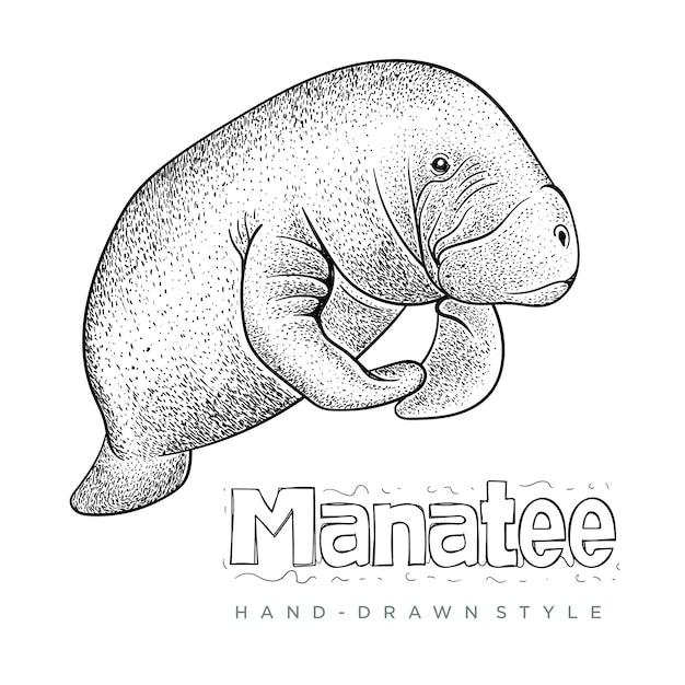 マナティー手描き動物イラスト Premiumベクター