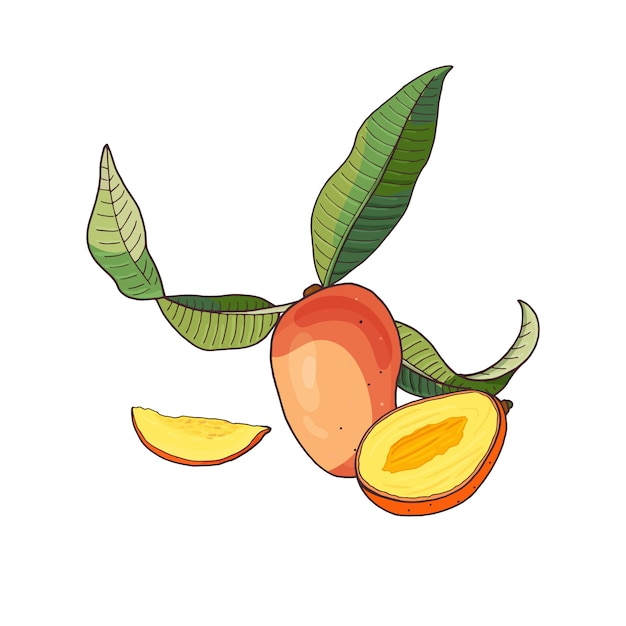 Mango.tropical fruit with slices and green leaves on white Premium Vector
