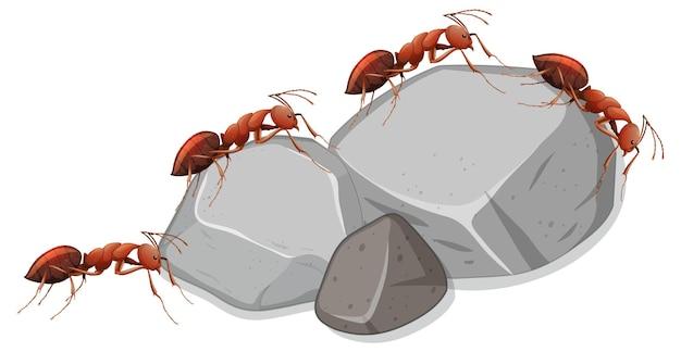 흰색 바탕에 돌에 많은 개미 무료 벡터