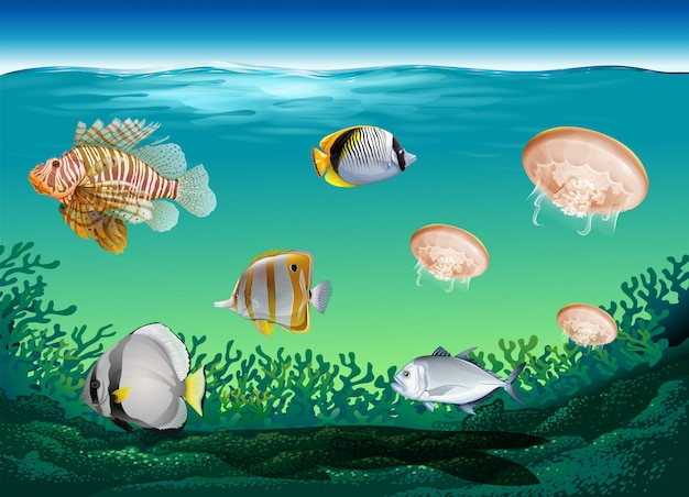 Many fish swimming under the ocean Free Vector