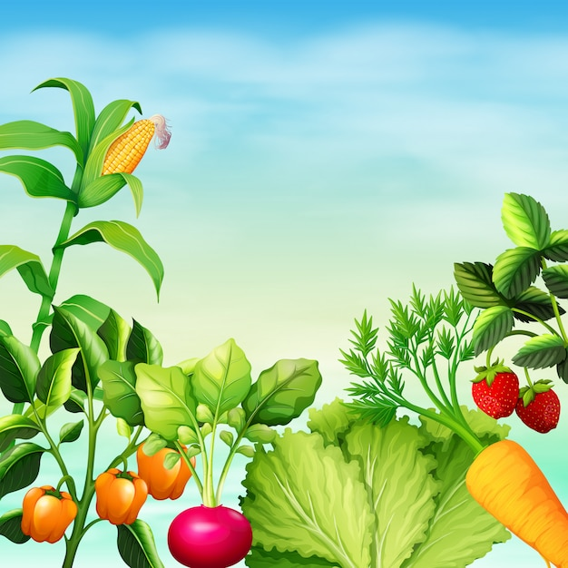 Many types of vegetables Free Vector