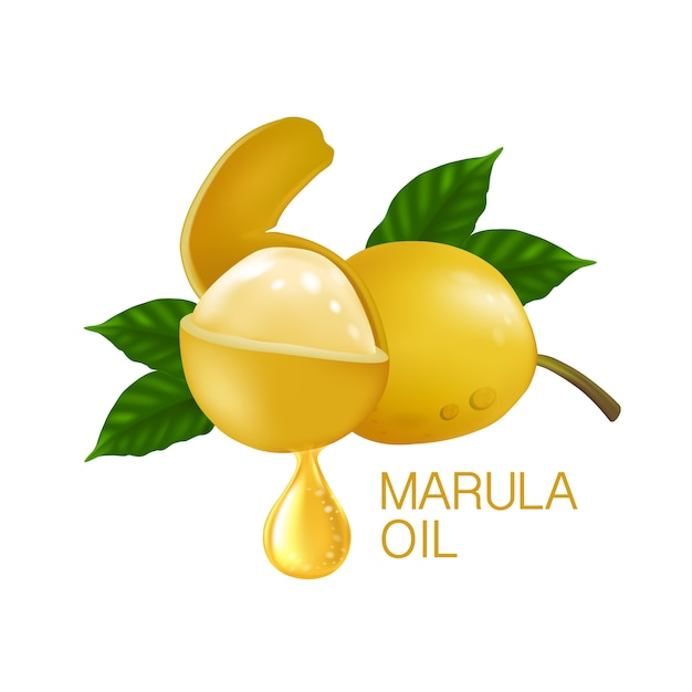 Premium Vector   Marula fruit with leaves isolated