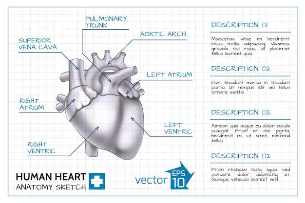 의료 심장학 인포 그래픽 무료 벡터