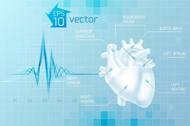 디지털 스타일의 밝은 파란색에 인간의 마음의 해부학과 의료 무료 벡터