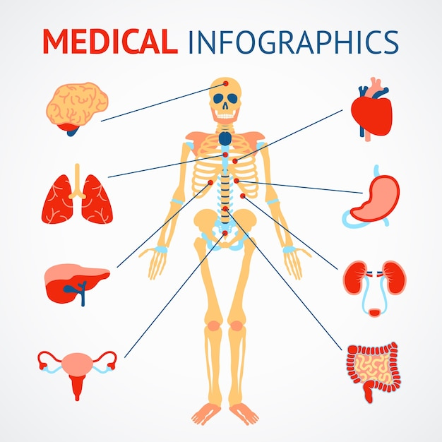Medical infographic set of human skeleton and internal organs vector illustration Free Vector